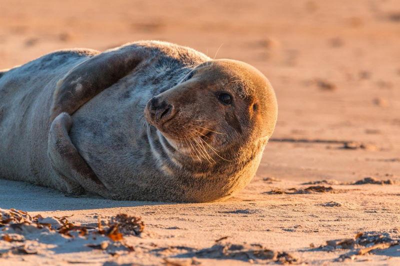 Robben, die sich entspannt sonnen