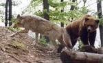 Bildungs- und Ferienstätte Eichsfeld - Bärenpark Worbis