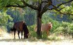 Reiterferien am Bodensee mit Islandpferden
